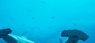 Haifischhandel boomt