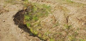 Bodenschutz: Wenn der Boden dicht macht