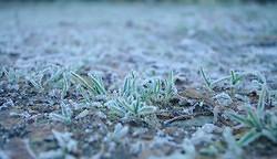 Frozen Grass... (Photo)