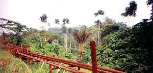 Todesstille im Regenwald
