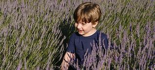 Karussel oder Kultur? Drei-Generationen-Urlaub in der Provence