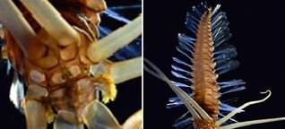 Anzahl unentdeckter Arten ist astronomisch hoch