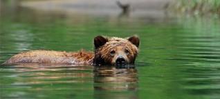 Segeltörn zum Great Bear Rainforest: Killerwal und Geisterbär - manager magazin