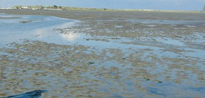 Wattenmeer: Frag' nach beim Muschelfischer - Reise - Welt - Tagesspiegel