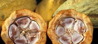 Ivory Coast's cocoa blues