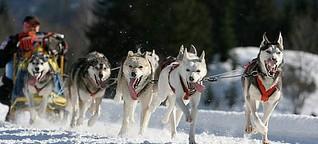 Winter aktiv: 10 spannende Wintersportarten