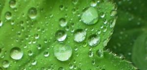 Reinigende Membranen nach Pflanzenvorbild