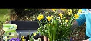 Besser gärtnern mit Dehner - Kästen und Kübel bepflanzen im Frühjahr