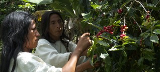 Fairtrade in Kolumbien: Jede Bohne ein Stückchen Land