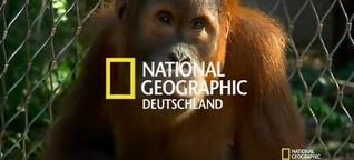 Kritik an Zoohaltung: Forscher fordern Grundrechte für Menschenaffen - SPIEGEL ONLINE