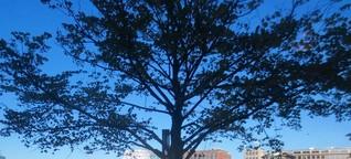 Hafenbaum