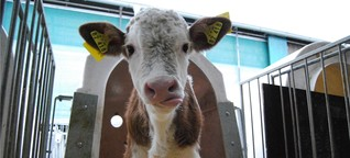 Milchbauer zwischen Dorf und Weltmarkt