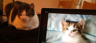 #BrusselsLockdown: Katzenbilder zwischen Solidarität und Gehorsam