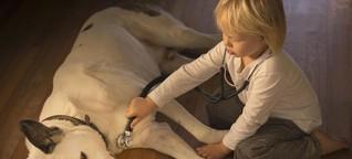 Wie man seinem Haustier über eine Erkältung hilft