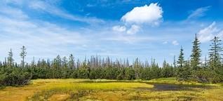 Welttag der Feuchtgebiete, NABU