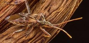 Der Käfer auf unserem Flur