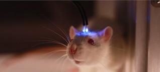 Optogenetik: Vergessenes reaktivieren - mit Licht