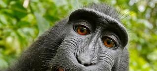 Affen: 10 Gründe, warum man Makaken einfach lieben muss