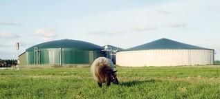 Natürliche Energiequelle: Strom aus Gülle und Bioabfall