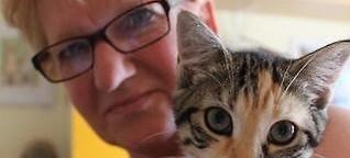 Tag der Katze: Tierschützer fordern Katzenverordnung mit Kastrationspflicht - Rhein-Zeitung