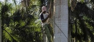 Verwendung von Palmöl: Ein fettes Dilemma