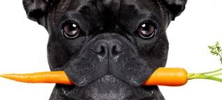 DOGS | Karotten statt Knochen