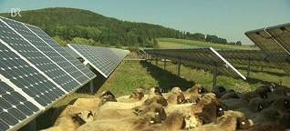 Schafe unter Solarmodulen: Doppelte Flächennutzung | BR Mediathek VIDEO