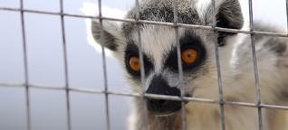 Illegaler Wildtierhandel: Ein Affe im Warenkorb