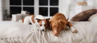 7 Apps, die jeder Hundehalter haben sollte
