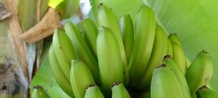Glücklicher mit Bananenmehl