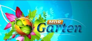 MDR Garten | MDR.DE