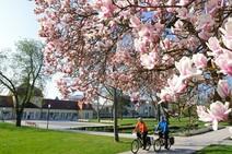 Frühlingsstrecken: Radtouren in Deutschland - welche passt für Sie? - SPIEGEL ONLINE