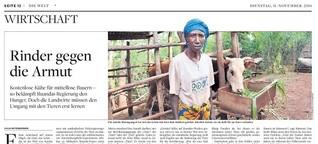 Rinder gegen die Armut