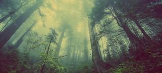Wälder: Ab durch den Kamin