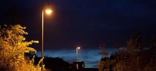 Lichtverschmutzung gefährdet Bestäubung von Pflanzen