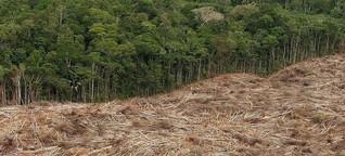 Brasilien: Brutale Landkonflikte: Kampf zwischen Groß- und Kleinbauern | Journal | SWR2