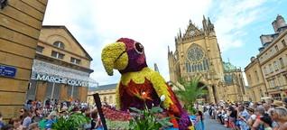 Metz feiert wieder die Mirabelle