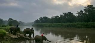 Elefantenreiten: Urlaub im Graubereich
