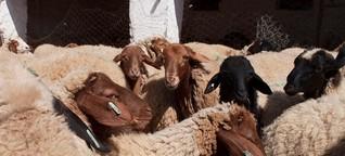 Tunesien: Opferlämmer mit Profilfoto | Wirtschaft