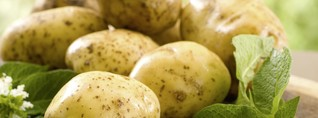 Vielfältige Kartoffelsorten