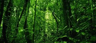 Das Märchen vom Urwald