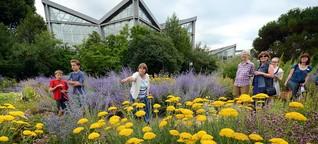 Palmengarten in Frankfurt: Steppenwiese im Palmengarten blüht