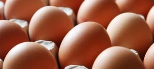 Insektizid-Funde in Legehennenbetrieben: Gift in noch mehr Eiern