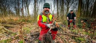 "Nach Sturm ""Ela"": Stadt pflanzt 37.000 Bäume"