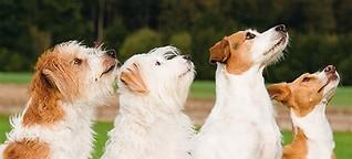 Buchproduktion Hundeschule