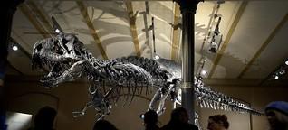 Das gefährliche Leben des T-Rex