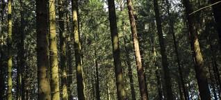 #TwitteringTree: In Europa twittern sieben Bäume
