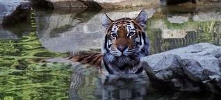Tiere und die Hitze im Straubinger Zoo