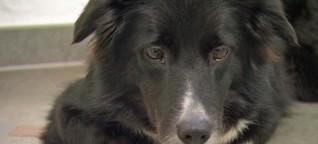 Gut zu wissen : Hunde schnüffeln mit Köpfchen