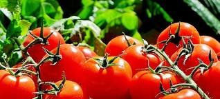 Tomatenextrakt für ein gesundes Herz?